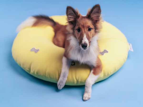 Yellow customisable dog bed singapore