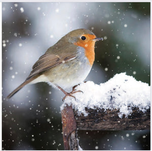 8 Pack Robin Christmas Cards