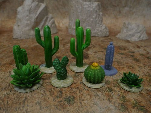 Cactus and Plants