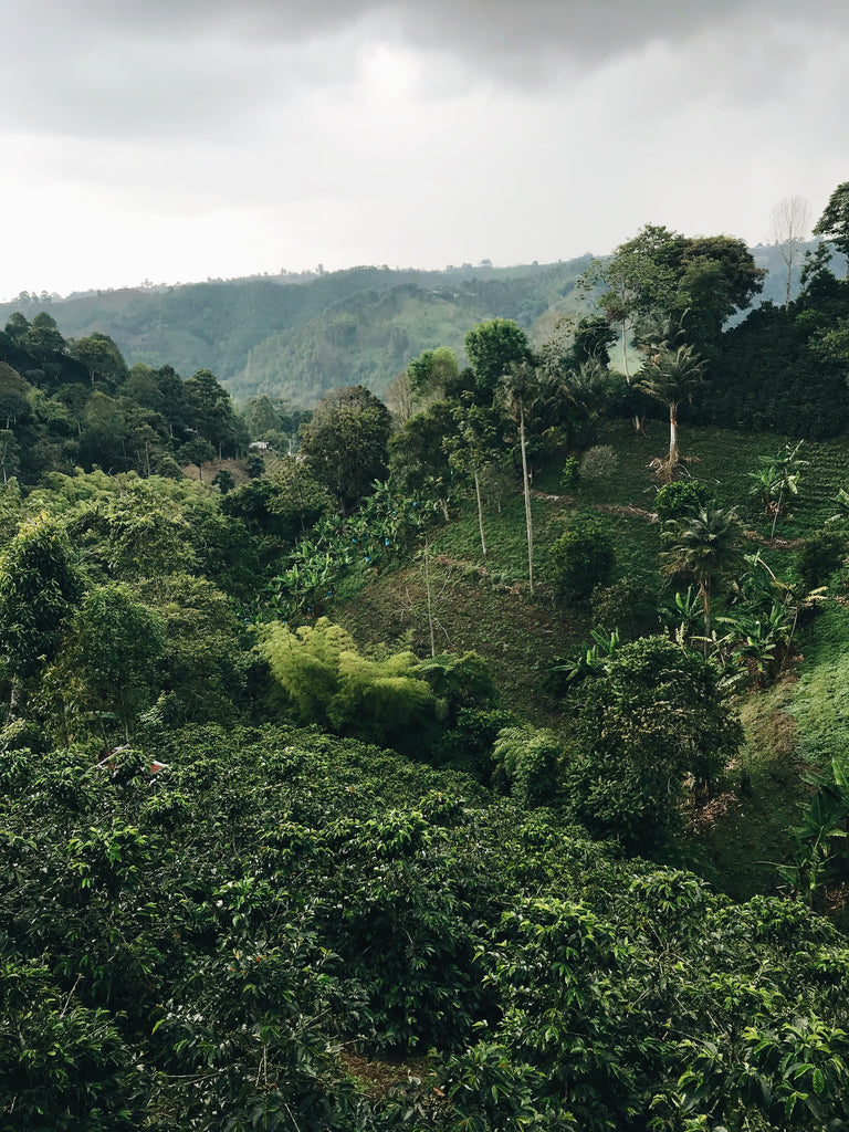 Colombian Coffee: Everything You Wanted to Know