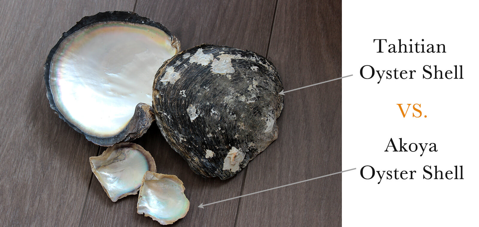 Oyster Shell Size Difference Akoya vs Tahitian Pearl