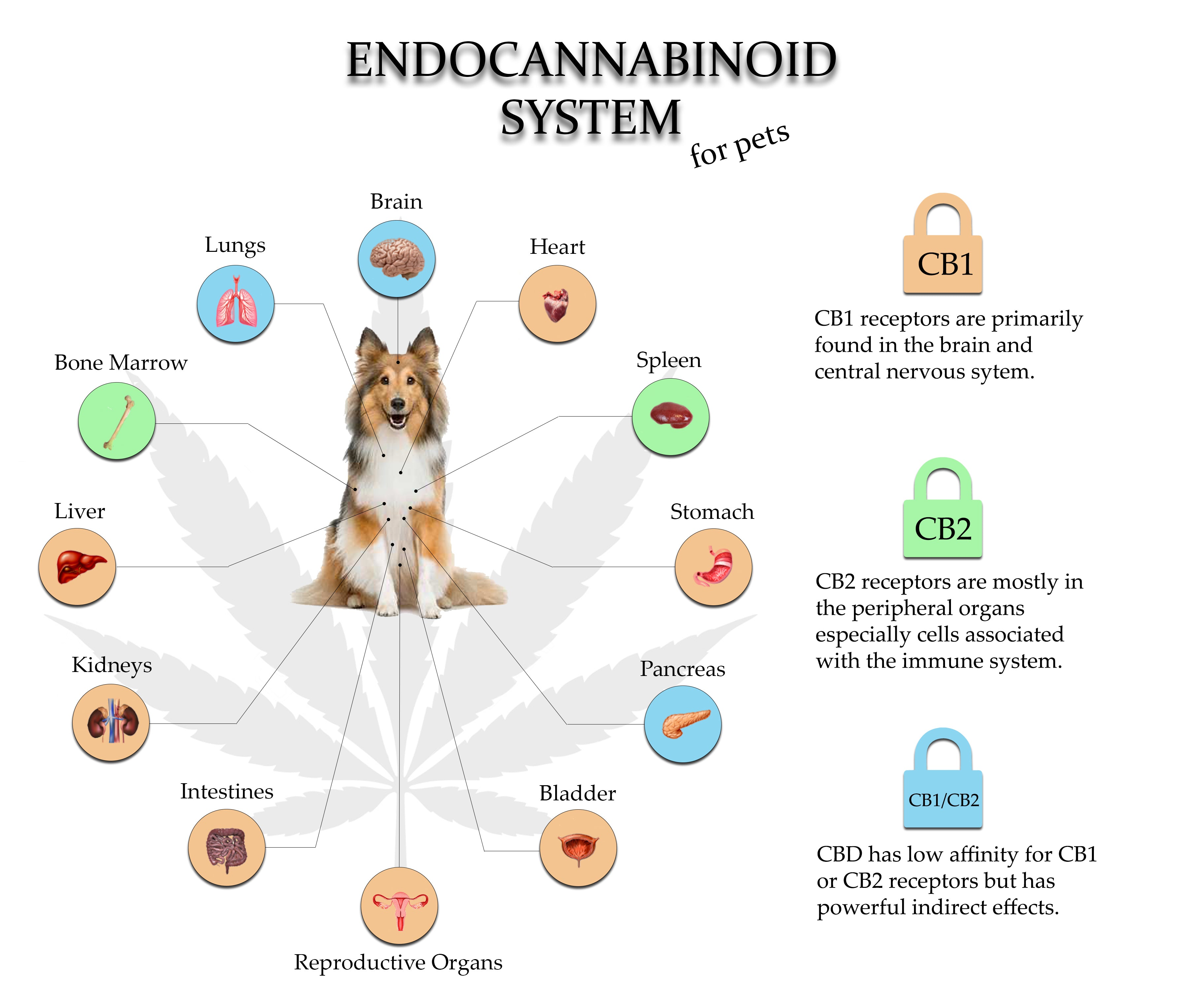 endocannabinoid system for pets