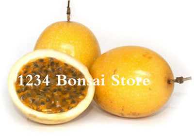 Orange Yellow Colombia Passion Fruit ,Granada, Passiflora Ligularis,Perennial Sweet Granadilla For Garden
