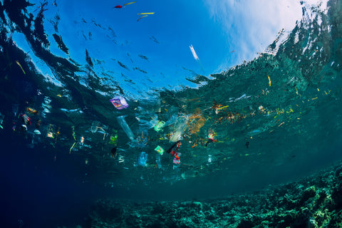 Plastic pollution is taking over our lands and oceans and hurting our wildlife