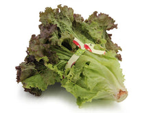 Load image into Gallery viewer, eKotwist-reusable-twist-tie-around-lettuce-khala-co