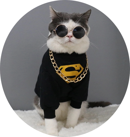 My Loved Kitty Cool Cat