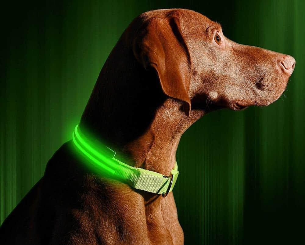 PetKiddies LED Safety Collar