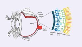 The eye - a blue light sensor (Melanopsin)