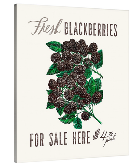 Blackberries For Sale