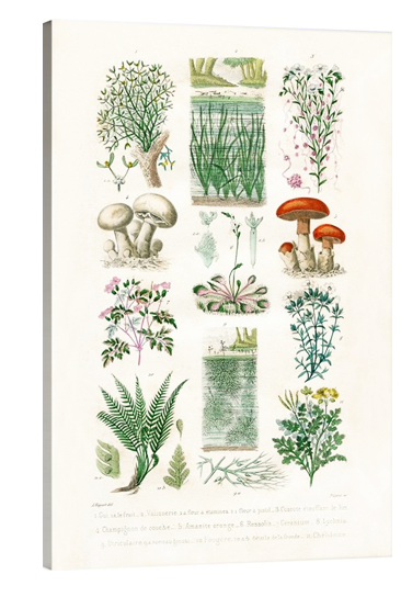 French Garden Botanical
