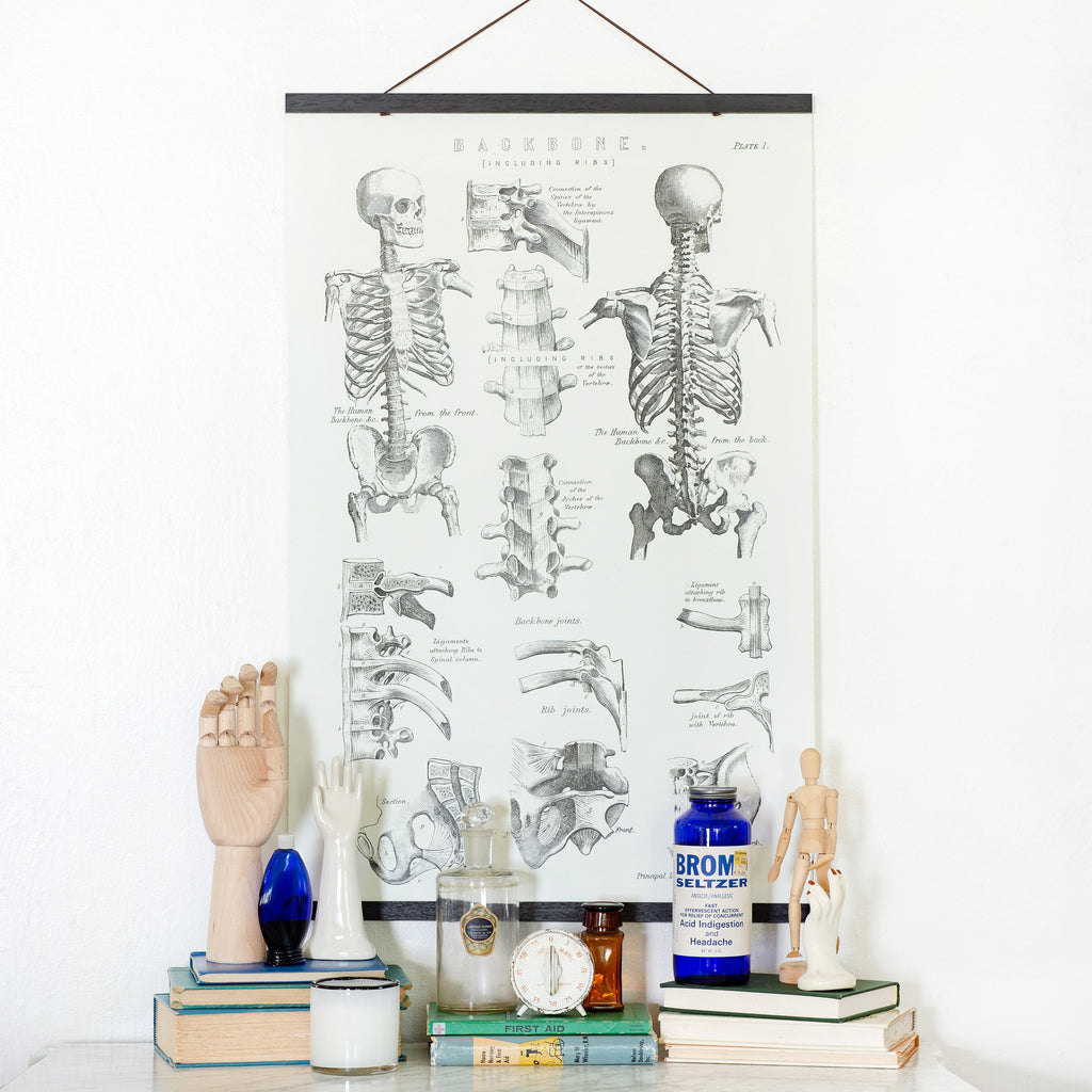 Antique Skeleton Illustration (Hanger & Kicker Frames)