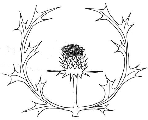 Line drawing of Scottish thistle, a design exclusive to Mountain Thyme