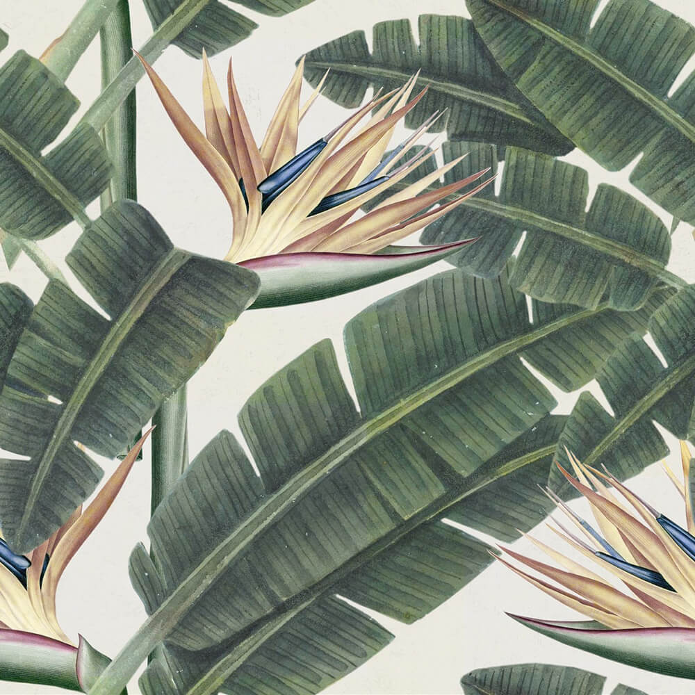 Tropical Bloom Wallpaper, Mind the Gap, Mind the Gap 2017, Wall to Wall Wallpaper | Contemporary Wallpaper Online NZ