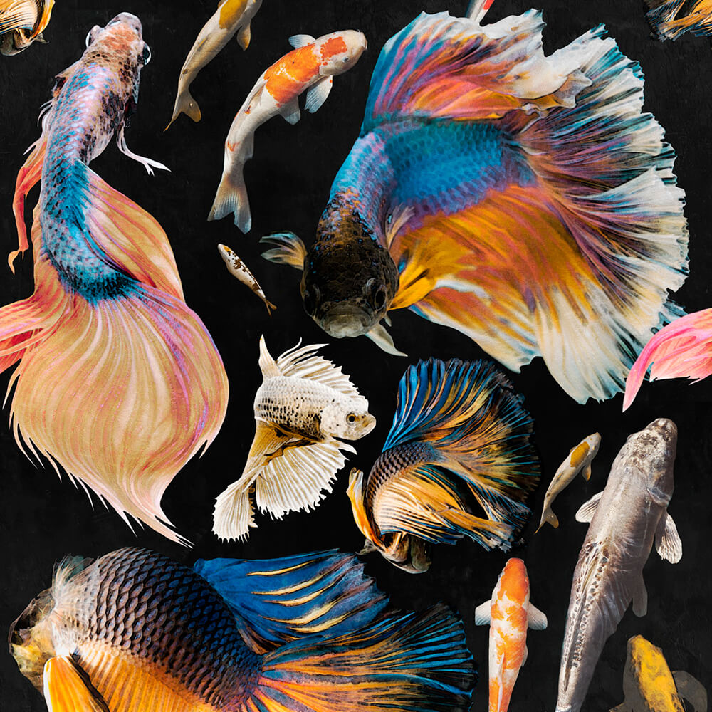 Goldfish Anthracite Wallpaper, Mind the Gap, Mind the Gap 2019, Wall to Wall Wallpaper | Contemporary Wallpaper Online NZ