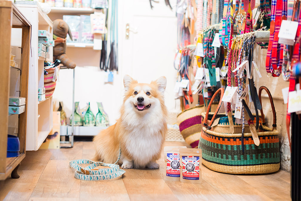 Marcel Le Corgi visits our store for The Evening Standard