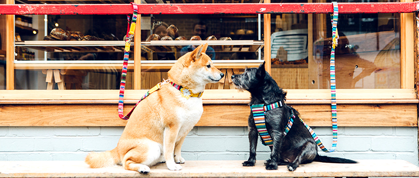 Dog-friendly Cities we love in celebration of International Dog Day