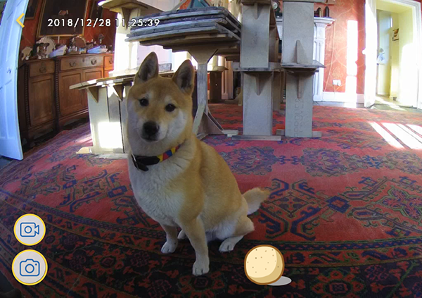PRODUCT REVIEW | FURBO DOG CAMERA