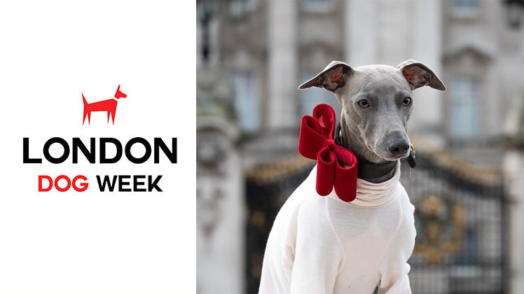 WIN HIro + Wolf prizes at London Dog Week 2019