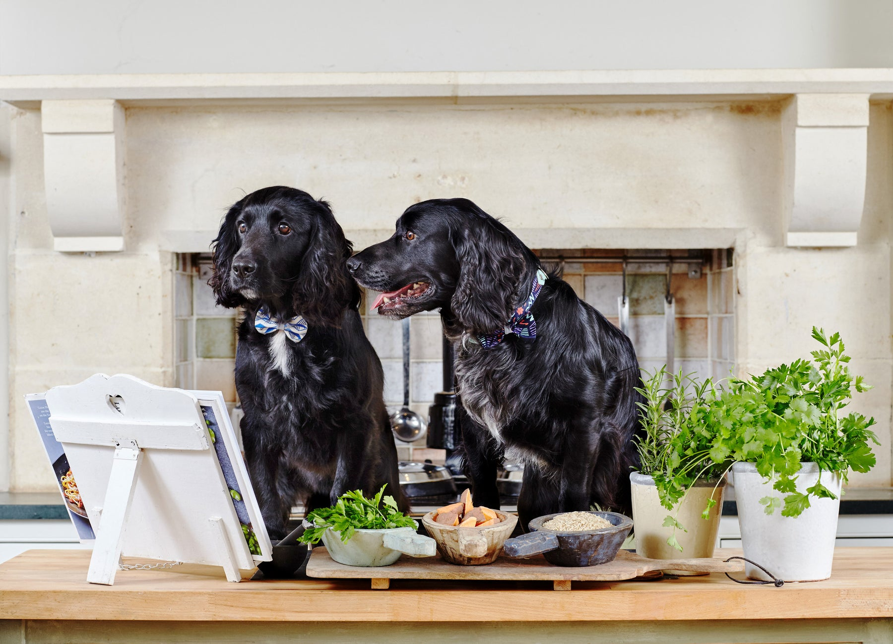 The Houndsley Brothers launch Forthglade's 'Clean Eating for Pets Campaign'