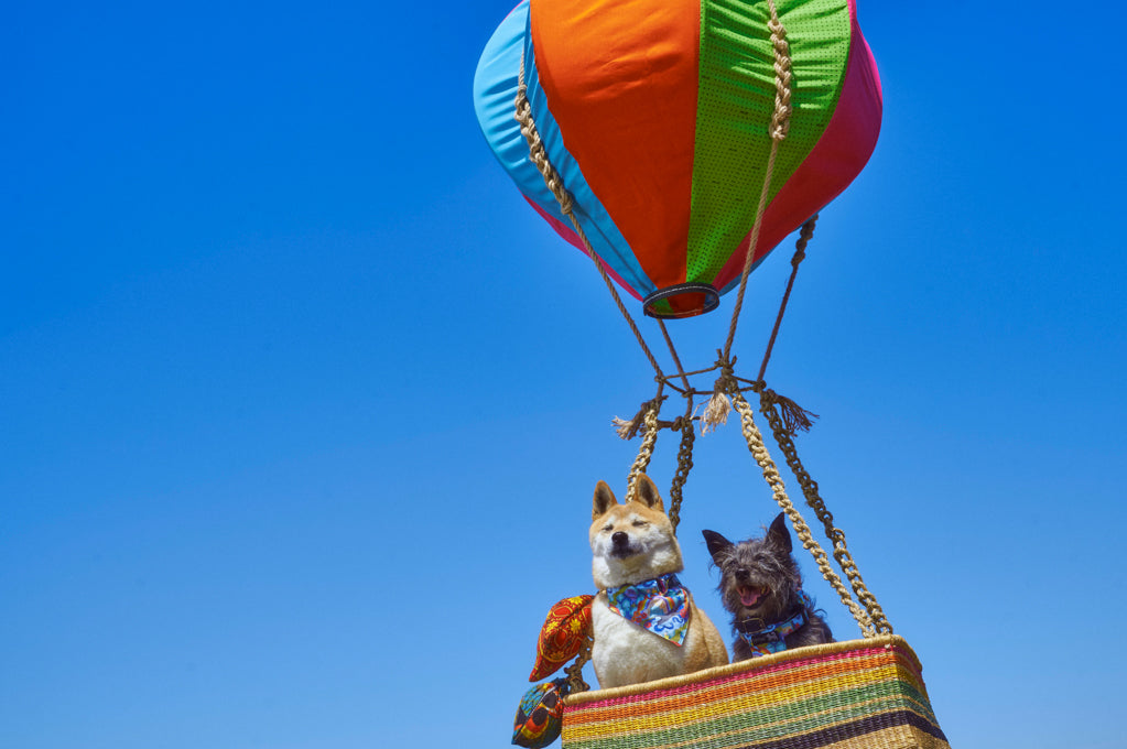 Flying High! What it means to win the Best Independent Luxury Pet Accessories Brand in London.