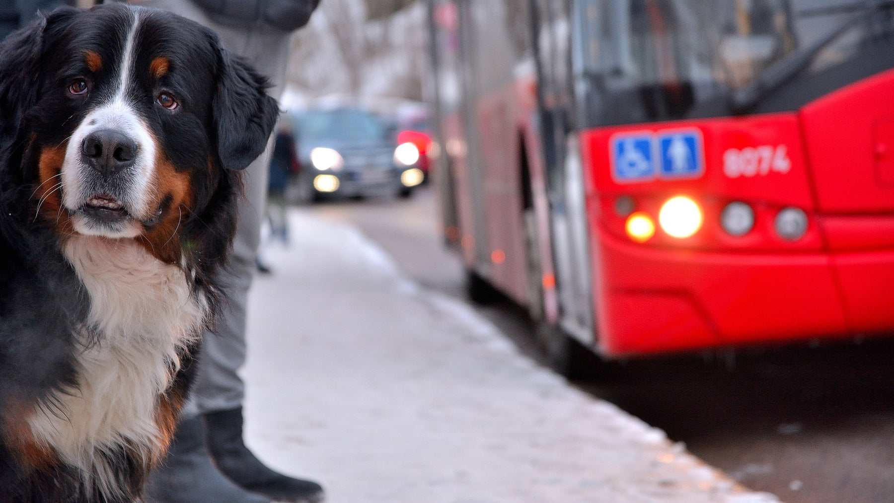 Top Tips for Taking Your Pet on Public Transport
