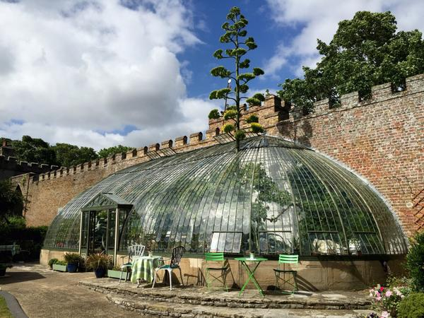 Walkies with Wolf | Italianate Glasshouse Ramsgate