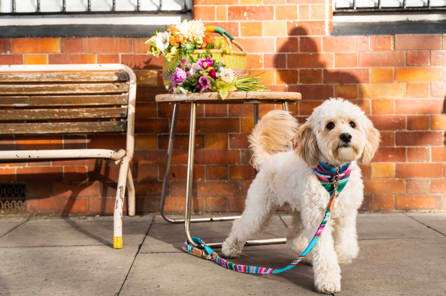 Spring Must-Haves For Stylish Pets