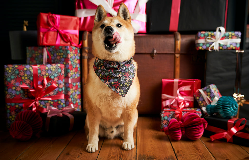 hiro wears hiro and wolf Christmas Snowflakes dog bandana