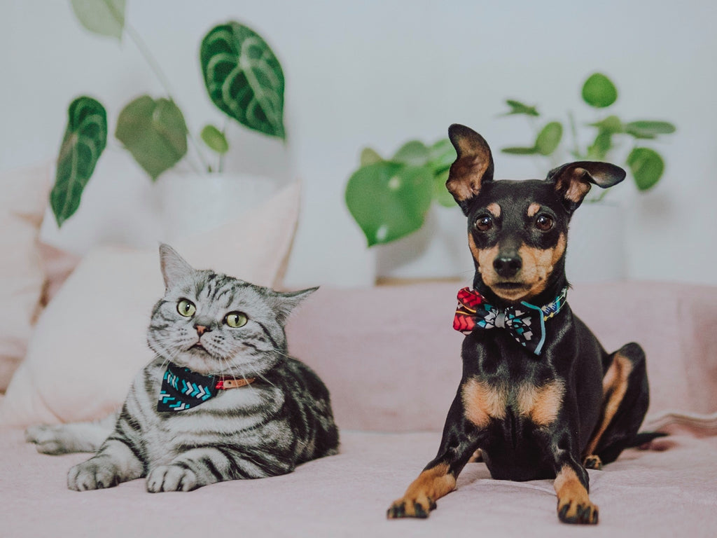 Io and Janosch (cat and dog) sat on a bed infront of various houseplants
