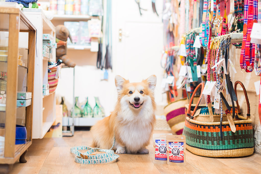 marcel le corgi hiro and wolf shop
