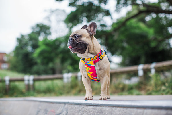 Hiro + Wolf x Eroc Dog 'Valour' Dog Harness
