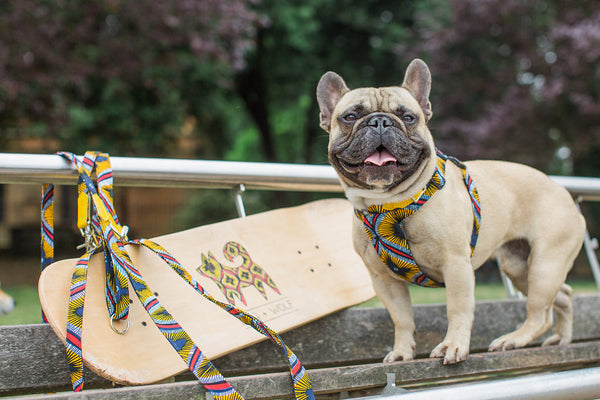 Hiro + Wolf x Eroc Dog 'Fatefulness' Dog Harness and Lead