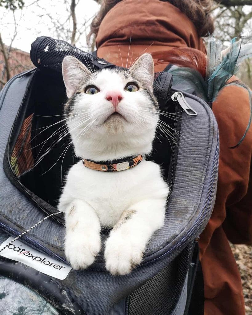 cat riding in backpack