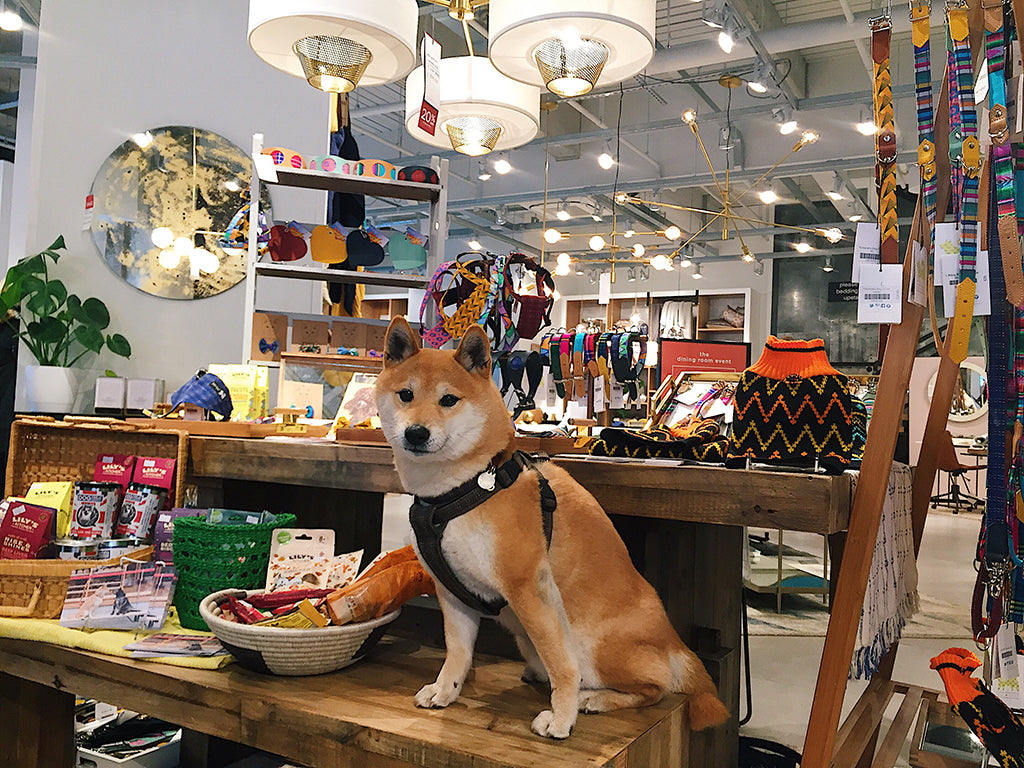 hiro at the dog pop up at west elm kingston