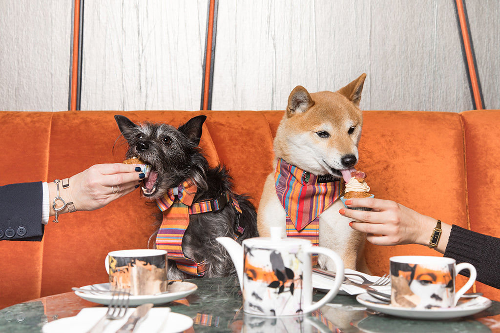 hiro and wolf savage garden dog brunch