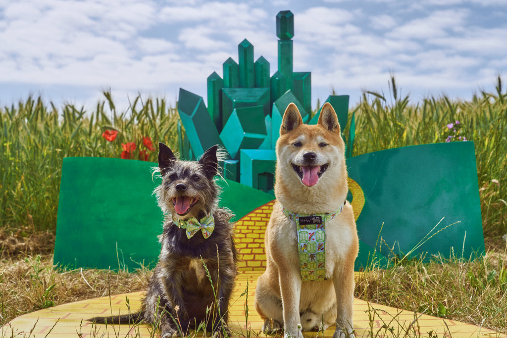 hiro and wolf in front of the emerald city