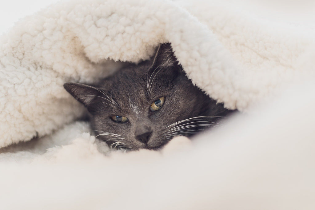 cat wrapped up in a blanket