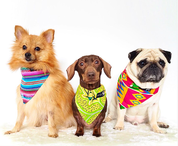 pop sausage, puggy smalls and pomegranate wearing Hiro + Wolf dog bandanas