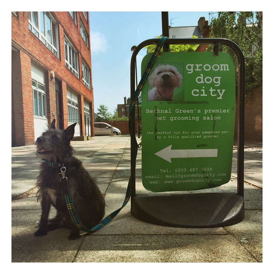 groom dog city dog groomers east london
