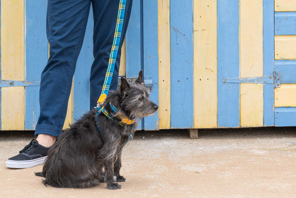 Shuka Blue Dog Collar