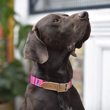 Inca Pink Dog Collar