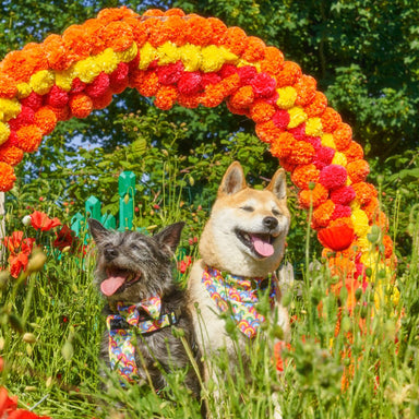 Over the Rainbow Dog Harness