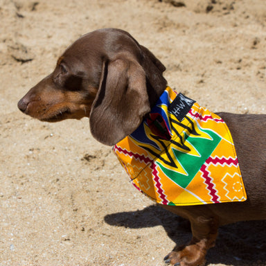 Kente Dog Bandana