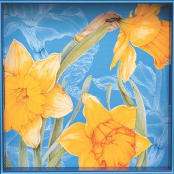Daffodils in Bloom Tray