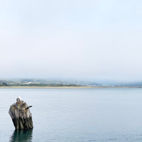 humboldt bay on a foggy day