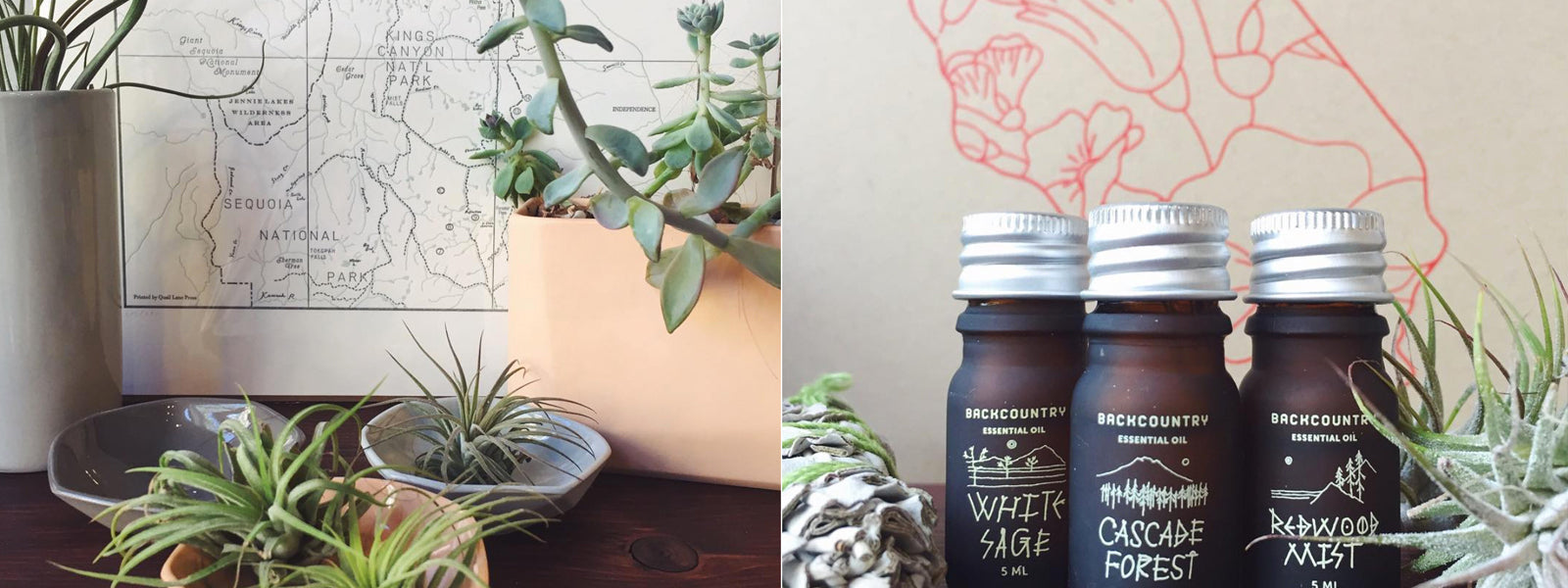 products on a shelf- letterpress map, plants and a vase
