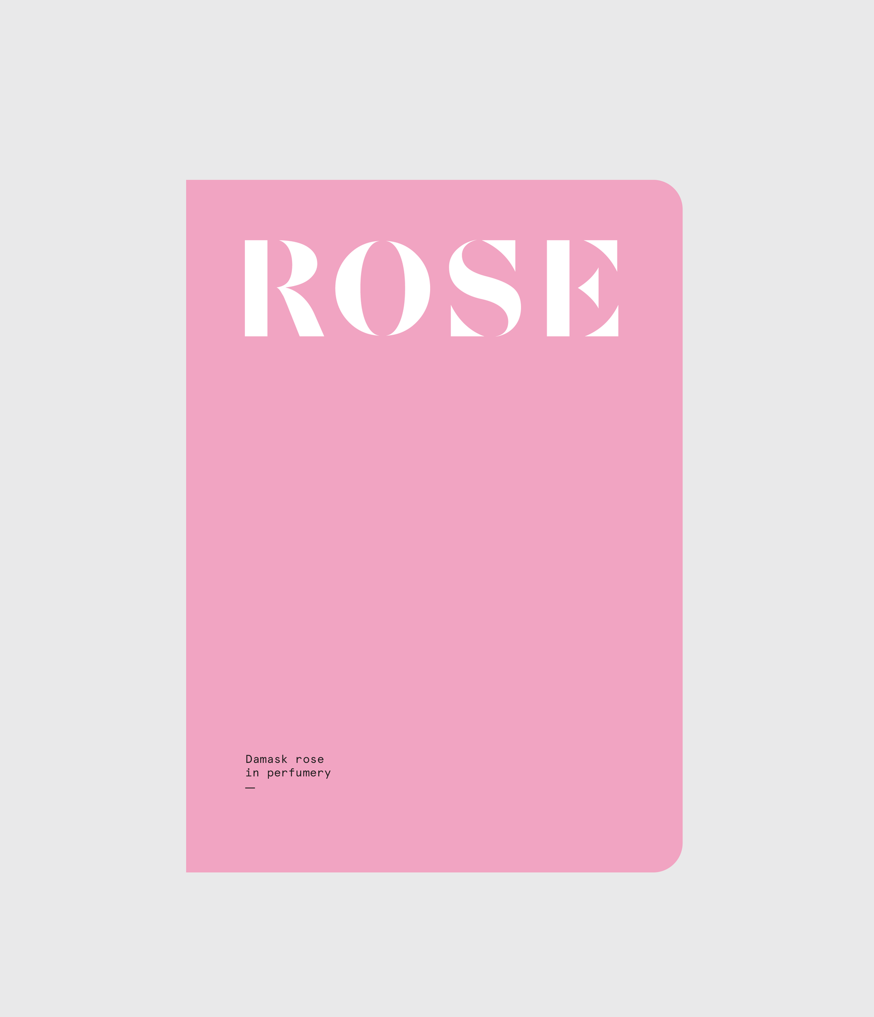 Rose | Damask Rose in Perfumery