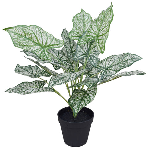 Artificial Potted White Evergreen Aglaonema 40 cm
