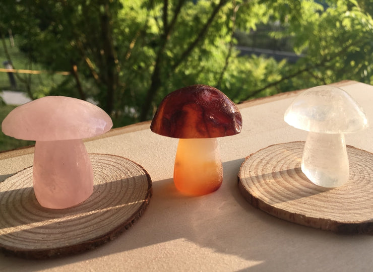 5 Gemstone Mushrooms Collector Pack - collection