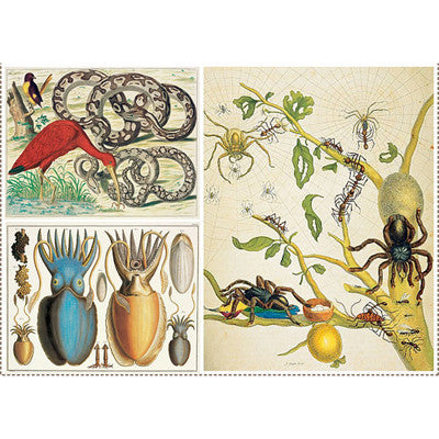 CABINET OF NATURAL CURIOSITIES by ALBERTUS SEBA